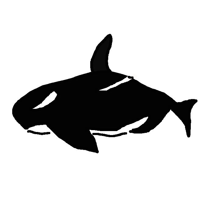 【鯱】マイルカ科の哺乳類。体長約7メートルのハクジラ。背は黒色、腹は白色。雄の背びれは大きく、直立する。性質は獰猛(どうもう)で、イカ・魚類のほかアザラシ・アシカ・イルカ類、時には群れで鯨などを襲う。さかまた。