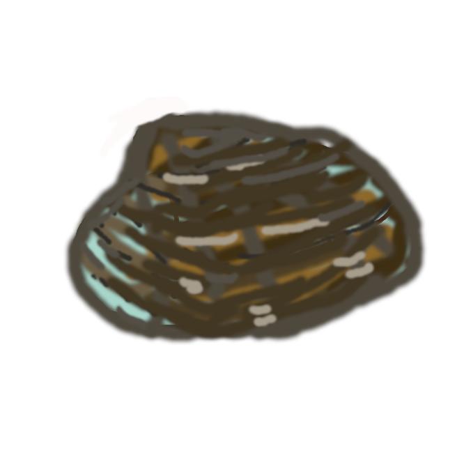 【浅蜊】マルスダレガイ科の二枚貝。淡水の流れ込む浅海の砂泥地にすむ。殻長約4センチ。殻表は粗い布目状で、模様は変化に富む。食用。あさりがい。