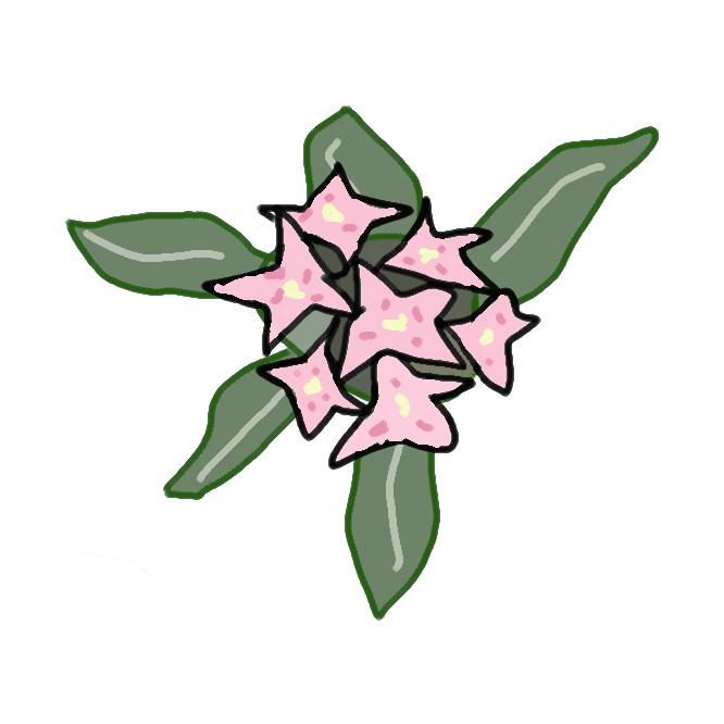 【沈丁花】ジンチョウゲ科の常緑低木。よく分枝し、つやのある倒披針形の葉を密につける。早春、紅紫色または白色の香りの強い花を多数開く。中国の原産で、雌雄異株であるが、日本のものはほとんど雄株で実を結ばない。名は、花の香りを沈香(じんこう)と丁字(ちょうじ)にたとえたもの。