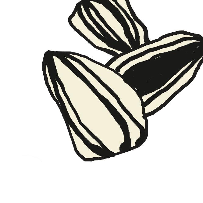 【ひまわりの種】立派なナッツの仲間で、気軽に栄養強化ができるすぐれもの。