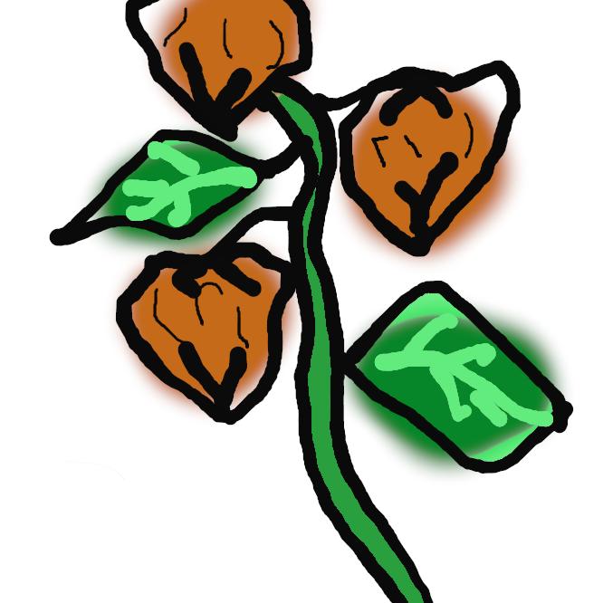 【鬼灯】ナス科の多年草。高さ60~90センチ。地下茎を伸ばして増える。葉は卵形で縁に粗いぎざぎざがある。6、7月ごろ淡黄白色の花が咲く。その後、萼(がく)が大きくなって果実を包み、初秋、果実が熟して萼とともに赤く色づく。地下茎を漢方で鎮咳(ちんがい)薬などにする。