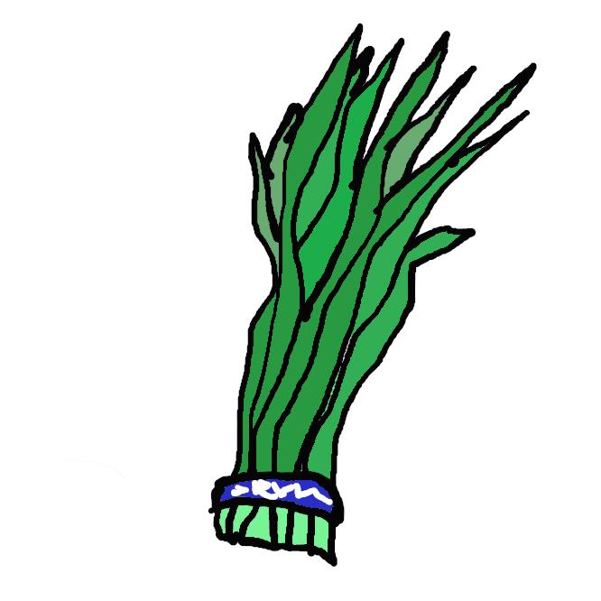 【韮】ユリ科の多年草。全体に特有のにおいがある。鱗茎(りんけい)は卵形で、細長く平たい葉が出る。秋、葉の間から高さ30~40センチの茎を伸ばし、半球状に白い小花を多数つける。アジア大陸に分布、葉を食用にする。