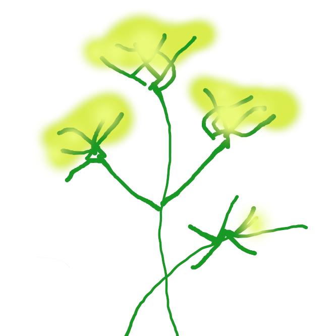 【茴香】セリ科の多年草。高さ1~2メートル、葉は細く糸状に裂けている。夏、多数の黄白色の小花が咲く。果実は卵状楕円形で芳香が強く、健胃薬や駆風薬にし、全草を香料に用いる。南ヨーロッパの原産で、古くから栽培。くれのおも。フェンネル。