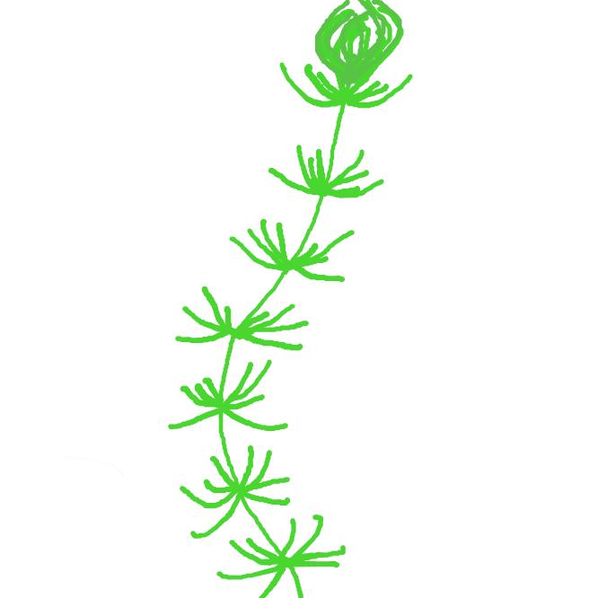【藻】海水・淡水中で生育する植物。藻類(そうるい)。また、海草や水草をさす。