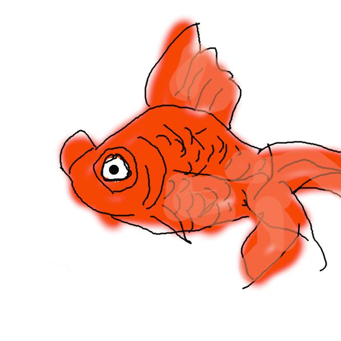 【出目金】金魚の一品種。目が著しく大きく、側方に突き出る。体形はリュウキン形。出目。