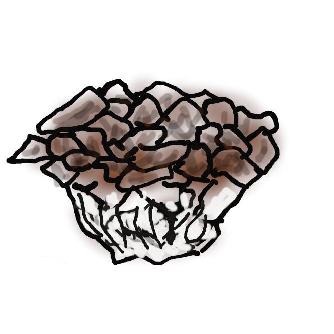 【舞茸】サルノコシカケ科のキノコ。秋にクリ・ナラなどの大木の根元に生える。茎はよく分岐し、多数の傘が重なり合って大きな塊状となり、表面は灰白色または暗褐色で裏面は白い。