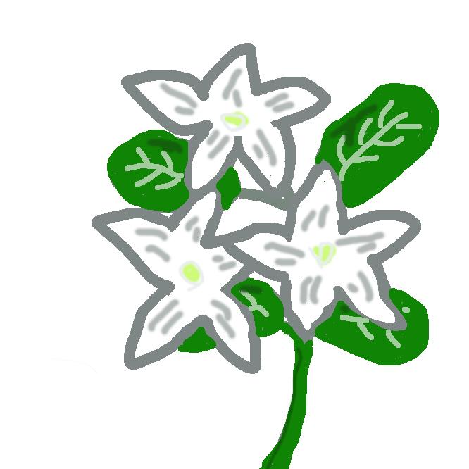 モクセイ科ジャスミン属の植物の総称。低木状・蔓(つる)状のものが多く、200種ほどあり、亜熱帯・熱帯地方に多い。花は白・黄色のものが多く、夏に咲き、筒形で香りがある。ソケイ・マツリカ・オウバイなど。