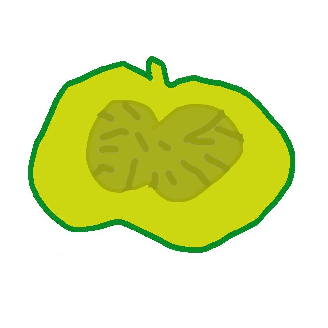 【カボチャ】ウリ科カボチャ属に属する果菜の総称である。原産は南北アメリカ大陸だが、主要生産地は中国、インド、ウクライナ、アフリカである。果実を食用とし、ビタミンA、ビタミンC、ビタミンEなどのビタミン類を多く含む緑黄色野菜に分類される。