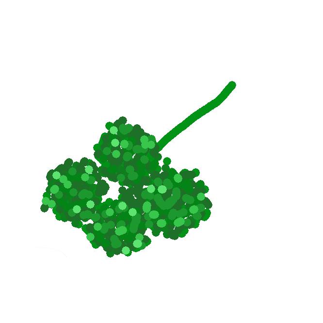 【parsley】セリ科の多年草。ふつう二年草として栽培され、特有の香りがある。葉は複葉で、細かく裂けている。2年目に淡黄緑色の小花が咲く。地中海沿岸の原産で、日本には江戸時代に渡来。肉料理のつまなどに用いる。オランダぜり。