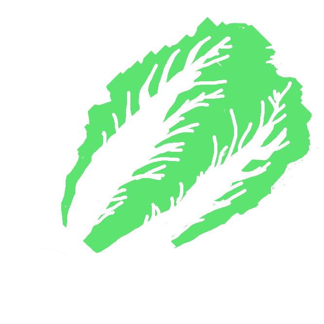 【白菜】アブラナ科の越年草。晩秋から冬の代表的な野菜。葉柄は扁平で幅広く、葉にしわがあり、密に重なり合う。春に淡黄色の花をつける。中国の原産とされ、日本には明治初期に渡来。漬け物に多用され、煮物などにも用いる。