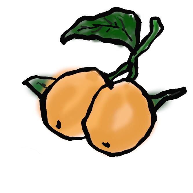 【枇杷:japanese plum】バラ科の常緑高木。四国・九州の一部に自生し、高さ約10メートル。葉は大形の長楕円形で、表面はつやがあり、裏面に灰褐色の毛が密生。秋から冬、黄色がかった白い花を密につける。夏、倒卵形の実が黄橙色に熟し、食用とされる。