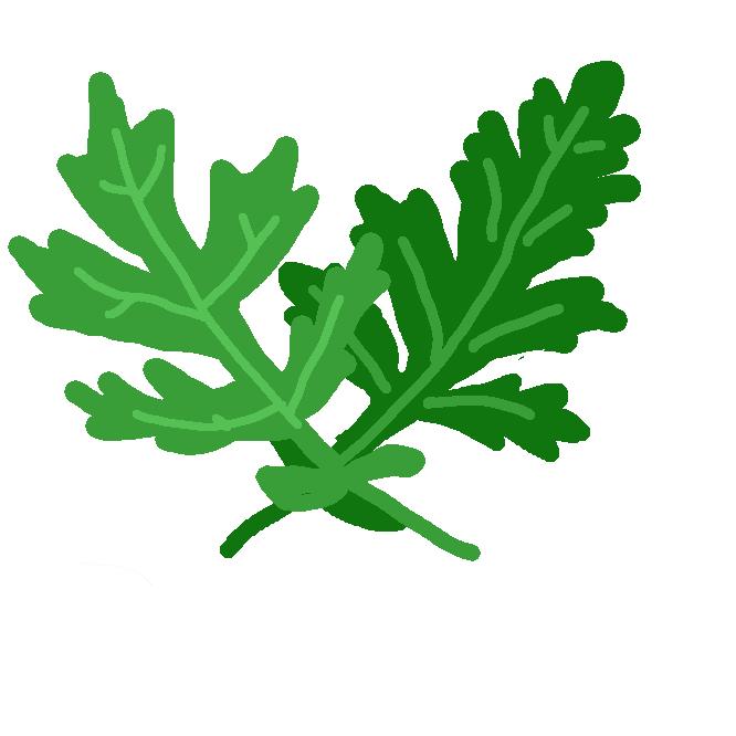 キク科ヨモギ属の多年草。山野に生え、高さ約1メートル。よく分枝し、特有の匂いがある。羽状に切れ込みのある葉が互生し、裏面に白い毛が密生。夏から秋、淡褐色の小花を多数つける。若葉を摘み、草餅(くさもち)などを作り、餅草(もちぐさ)ともよぶ。漢方では艾葉(がいよう)といい止血などに用い、葉の裏の毛をもぐさにする。