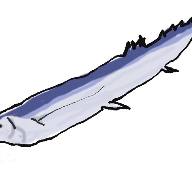 【秋刀魚】ダツ目サンマ科の海水魚。全長約40センチ。体は細長く、側扁し刀状、背部は暗青色、腹側は銀白色。外洋性回遊魚で、夏、北海道沖に現れ本土に沿って南下し伊豆諸島・四国沖に至り、春、再び北上する。常磐・房総沖を通過する10月ころのものが脂がのって最も美味。