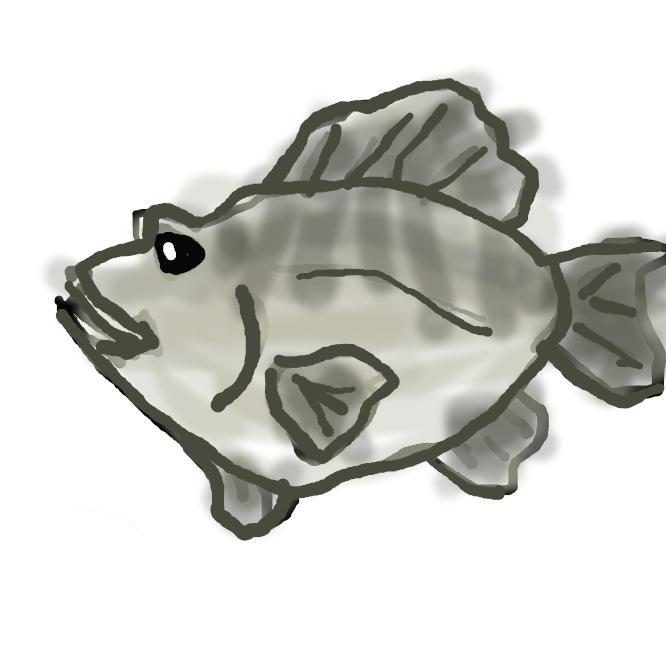 【目張】フサカサゴ科の海水魚、アカメバル・シロメバル・クロメバルの総称。沿岸の岩礁にすむ。全長約30センチ。体は長卵形で側扁し、目が大きい。体側に不明瞭な5、6本の横帯がある。卵胎生。