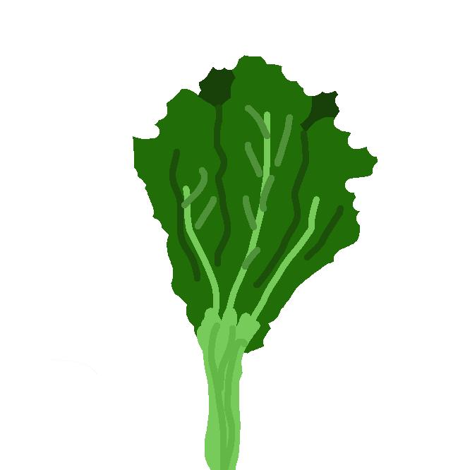 【野沢菜】カブの一品種。葉はへら形で長さ50〜80センチ。葉・根とも漬物にする。野沢温泉を中心に信越地方で栽培される。