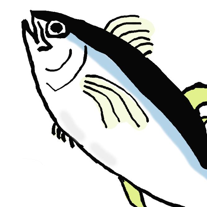スズキ目・サバ科・マグロ族 に分類される魚類の一種。和名は目がパッチリしていることから付いた。全世界の熱帯・温帯海域に広く分布する。7種のマグロの中でも漁獲量が多く、重要な食用魚となっている。