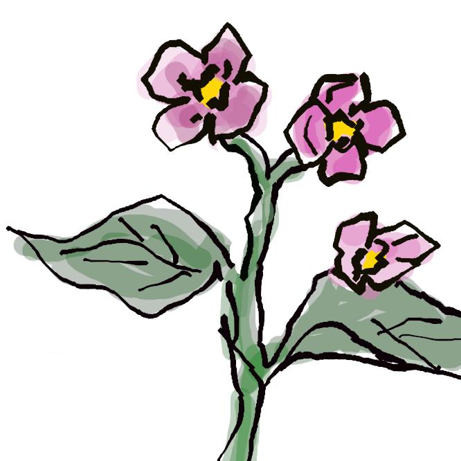 シュウカイドウ科ベゴニア属(シュウカイドウ属)の植物の総称。多年草または小低木で、熱帯に多く産し、種類も多い。茎や葉は多肉質で柔らかい。葉は卵形や心臓形で裏面が赤や紫色。花は4弁および5弁花で、白・桃・赤・黄色など。観賞用とし、園芸種は非常に多い。