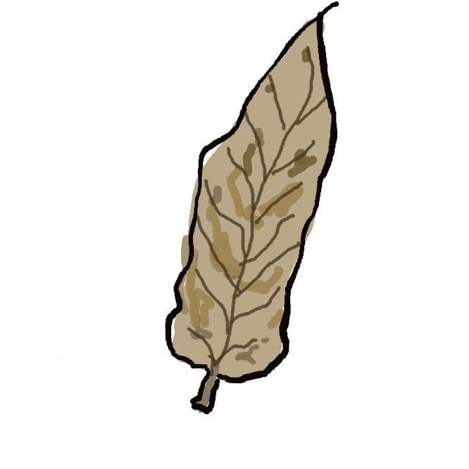 枯れた木の葉や草の葉。