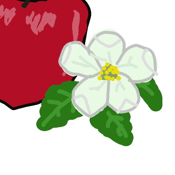 4~5月にかけて芽から5~6つが放射状にまとまって開花する。