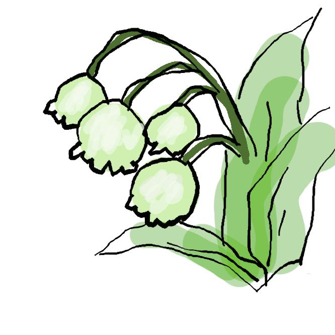 【鈴蘭】ユリ科の多年草。本州の高山や北海道に生え、葉は広楕円形で2、3枚出る。初夏、花茎を伸ばし、白い釣鐘形の小花を総状につけ、香りがある。栽培されるのは花の大きなドイツスズランが多い。きみかげそう。