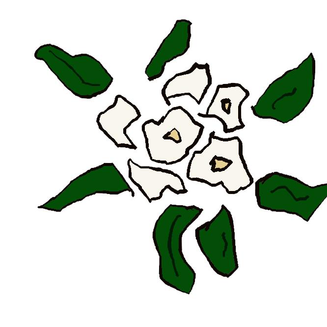 【根本石南花】ツツジ科の常緑低木。ハクサンシャクナゲの八重咲き品種。北海道・本州北部の高山帯に自生。7月ごろ、白色から淡紅色の花を開く。