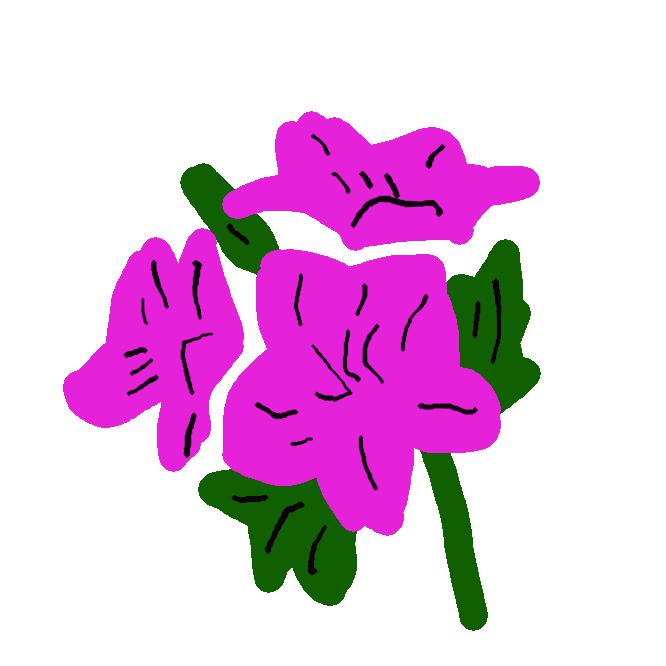 【深山霧島】ツツジ科の常緑低木。九州の火山性の高い山に分布。枝は細かく分かれ、長楕円形の小さい葉を数枚ずつつける。5、6月ごろ、紅紫色の漏斗状の花を開く。庭木にする。
