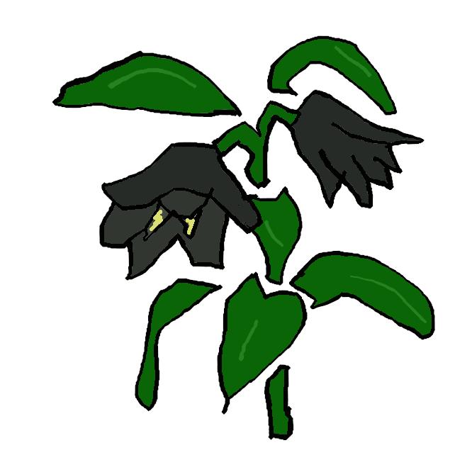【黒百合】ユリ科の多年草。本州中部以北の高山に生え、葉は4、5枚が数段に輪生する。夏、茎の先に暗紫色の花を一つ下向きに開く。