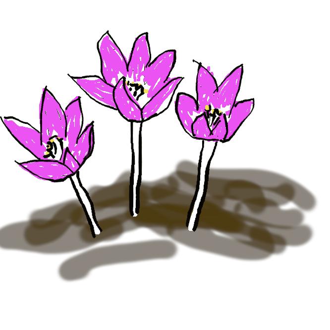 【洎夫藍】アヤメ科の多年草。クロッカスの秋咲き種。葉は線形で、花後に伸びる。11月ごろ紫色の6弁花が咲く。赤い花柱は止血剤などに、また香辛料、化粧品の着色剤として使われる。