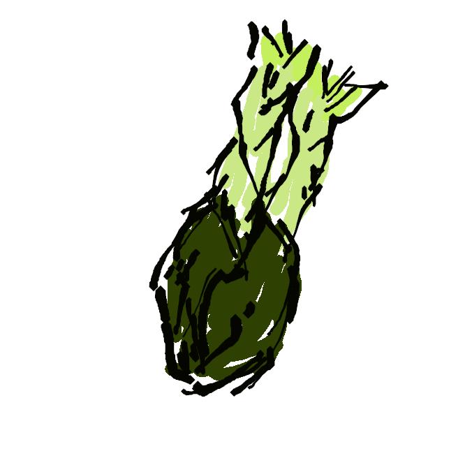 タラノキの若芽。春の若芽はウドに似た香りがあり食用とされる。