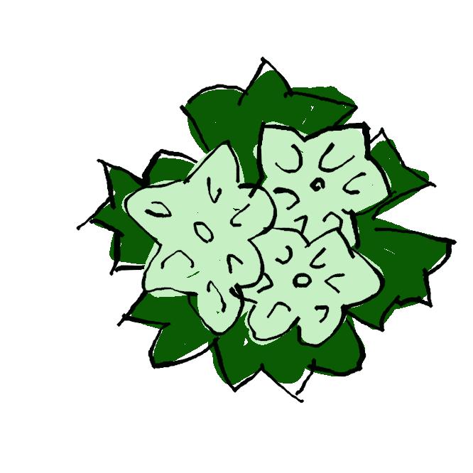 クスノキ科ニッケイ属の常緑高木である。別名クス、ナンジャモンジャ。暖地に生え、古くから各地の神社などにも植えられて巨木になる個体が多い。材から樟脳が採れる香木として知られ、飛鳥時代には仏像の材に使われた。