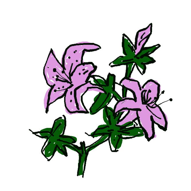 ツツジ科の常緑低木。山地に自生。枝の先が細く、小さい葉を密生する。春、淡紅色の花が咲く。関東西部から九州にかけて分布するが、雲仙岳には自生しない。
