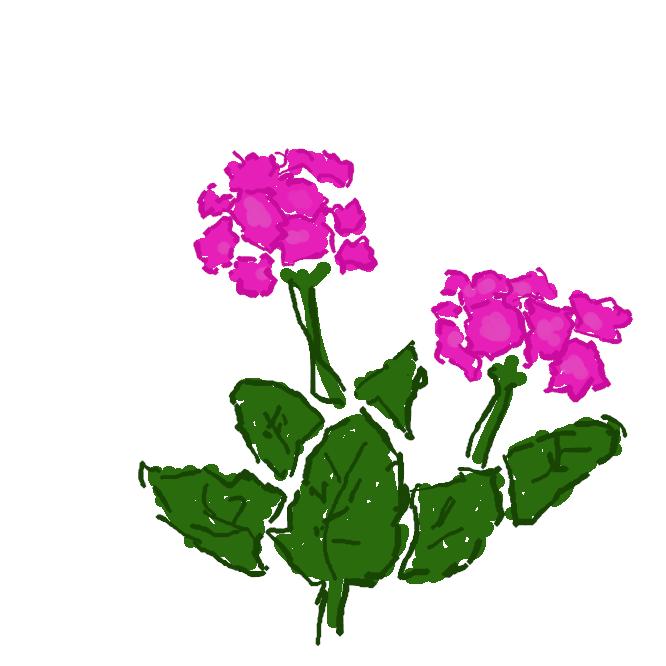 【桜草】サクラソウ科の多年草。低湿地に自生。葉は根際につき、楕円形で、縁が浅く裂けている。初春、花茎を出し、桜の花に似た紅紫色の5弁の花を数個開く。観賞用に栽培され、多くの品種がある。