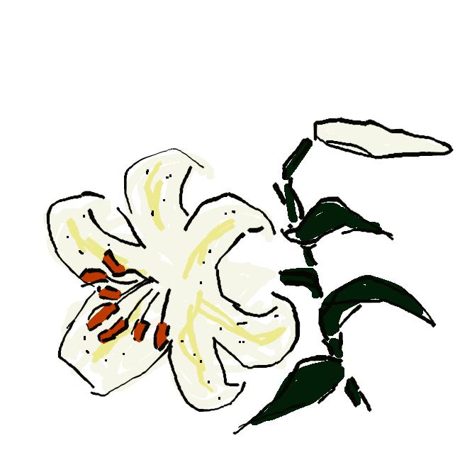 【山百合】ユリ科の多年草。山野に自生し、高さ約1.5メートル。葉は披針形で互生。夏、白色のらっぱ状の花が横向きに開く。花の内面には赤い斑点があり、強い香りを放つ。本州の近畿地方以北に多い。鱗茎(りんけい)は食用。